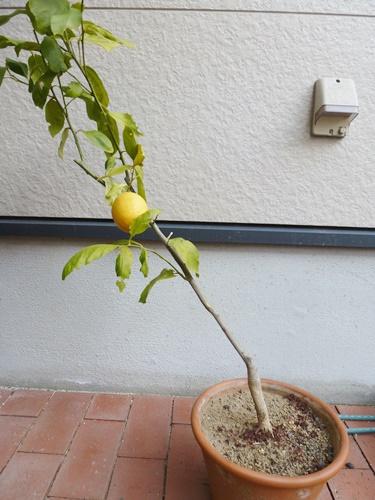 melonpan1
