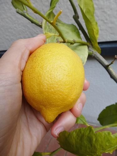 melonpan2