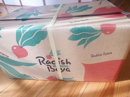 radish20120226011