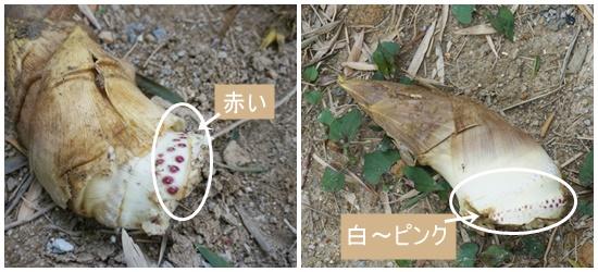 takenoko-mukai2